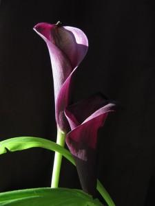 flower-628480_640